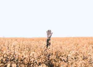 a man in a corn field, holding his hand up and out of the plants, finding joy in being in the nature